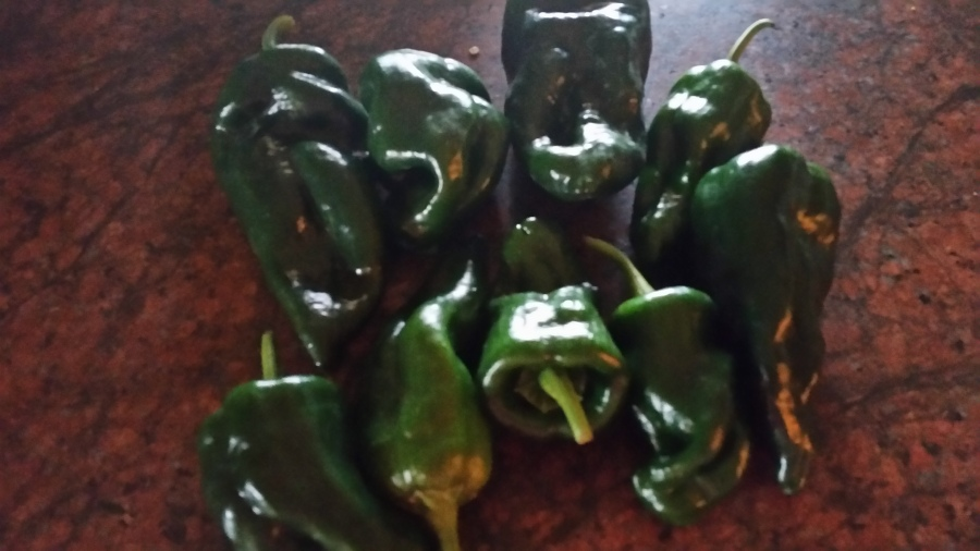 It is raining Peppers……..stuff them with potatoes